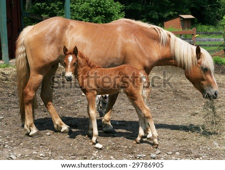 mare with filly