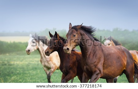 Mare with foal galloping in a field. Three horses close-up on a background of dark sky and beautiful scenery. Herd free - stock photo