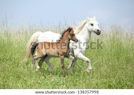 Mare with foal running on green pasturage
