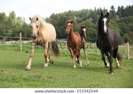 Mares with foals running together on pasturage - stock photo