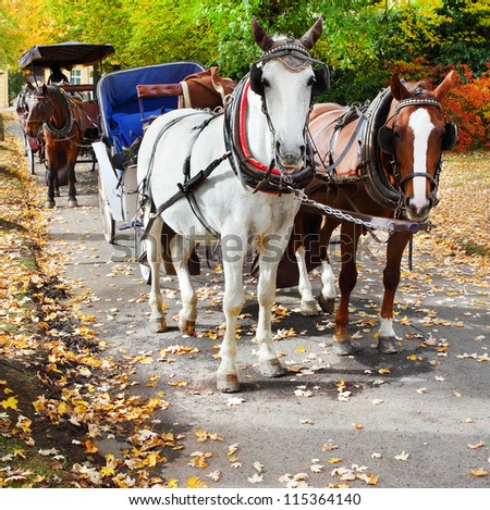 Marianske Lazne Spa, the carriage horses in the park. Traditional town transportation. Czech Republic, Europe. - stock photo