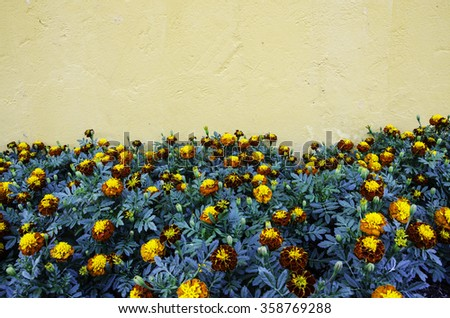 Marigold and orange concrete wall Texture - stock photo