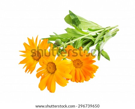 Marigold,Calendula Officinalis Medicinal Plant Isolated on White - stock photo
