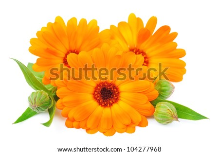 Marigold flower isolated on a white background. - stock photo