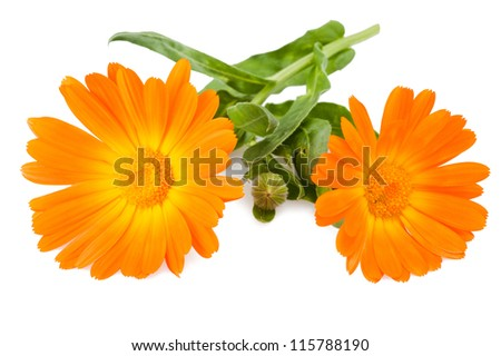 marigold flowers isolated on white - stock photo