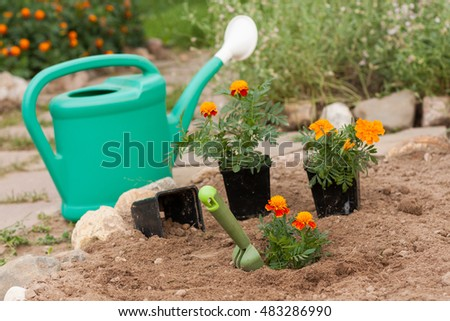 Marigold Flowers With Garden Tools In Garden In Spring Season. Planting Flowers.