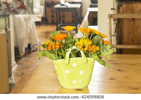 Marigold in a basket on a wooden table in the living room.