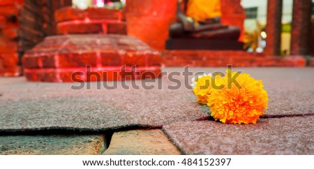 Marigold on the fool and red archaeological site background