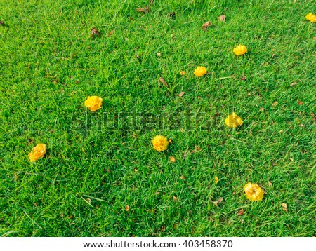 Marigold on the grass in the park - stock photo