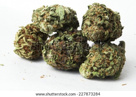 marijuana buds  - stock photo