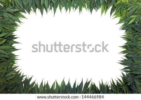 marijuana frame with white background - stock photo