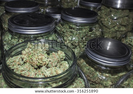 Marijuana Jars in Rows with Lid Off Showing Buds - stock photo