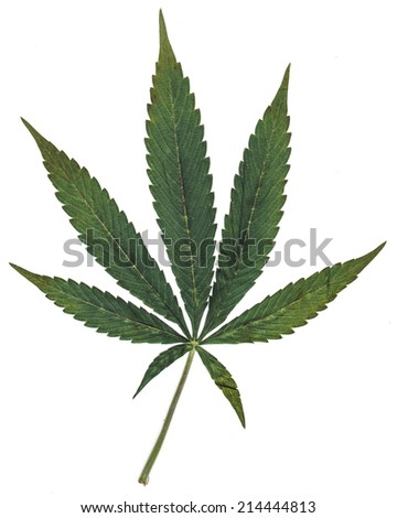 Marijuana Seven Point Pot Leaf. Seven leaf pot leaf isolated on white.