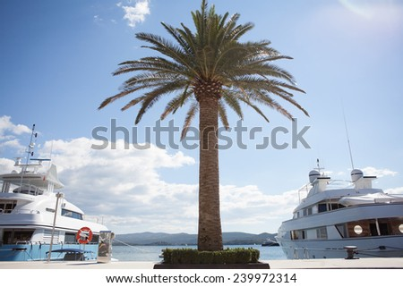 Marina with palm tree - stock photo