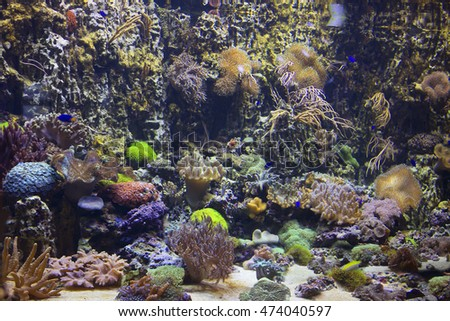 Marine aquarium with corals Soft and Horny corals inhabit the slopes of coral reefs in areas with clear water and fast current at the depth of from one to forty meters. Often form huge thickets.