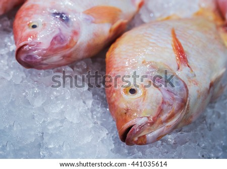 Marine fish on ice in the store