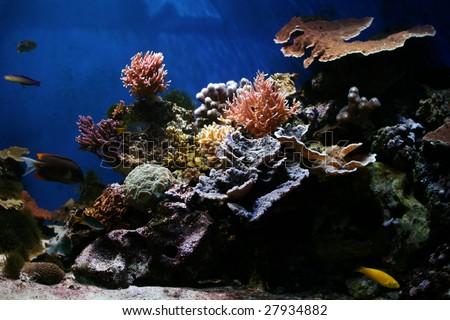 Marine Fish - Tropical Coral Reef - stock photo