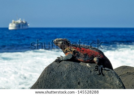 Marine Iguana tanning on Rock, Galapagos - stock photo