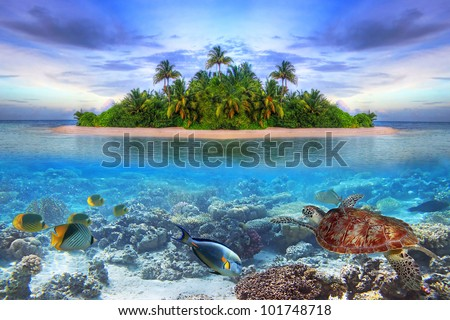 Marine life at tropical island of Maldives - stock photo