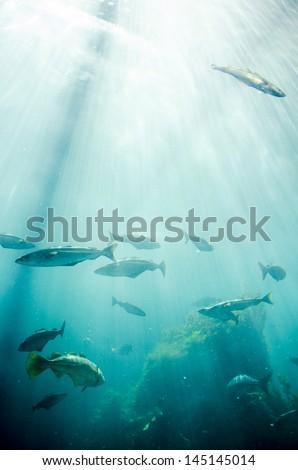 Marine life - Fish - School of fish - Underwater / Marine life - Fishes - stock photo