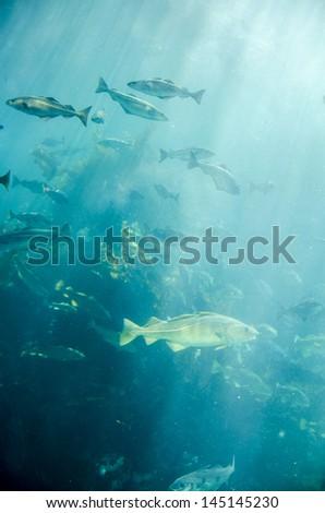 Marine life - Fish - School of fish - Underwater / Marine life - School of fish - stock photo