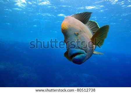 Marine Life in the Red Sea - stock photo
