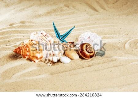 marine life on the beach - stock photo
