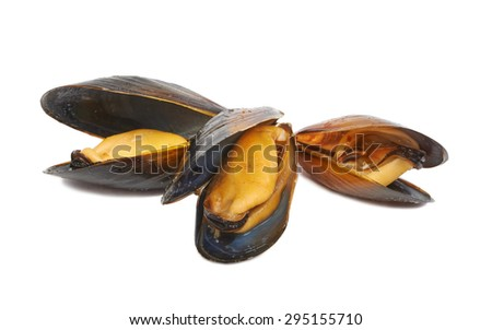 Marine mussels isolated  - stock photo