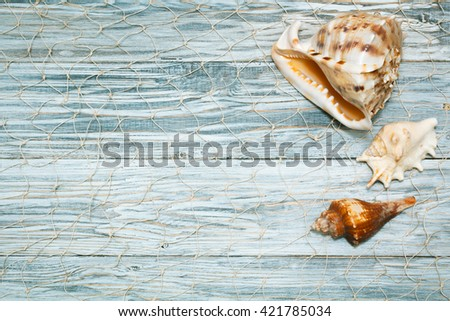 Marine shell on white boards, flat lay