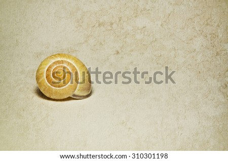 Marine shells on vintage background - copy space.