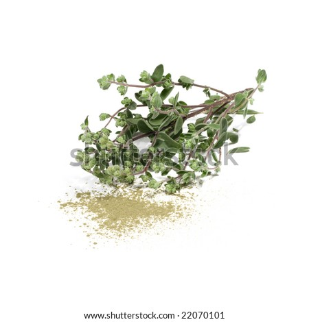 Marjoram - stock photo