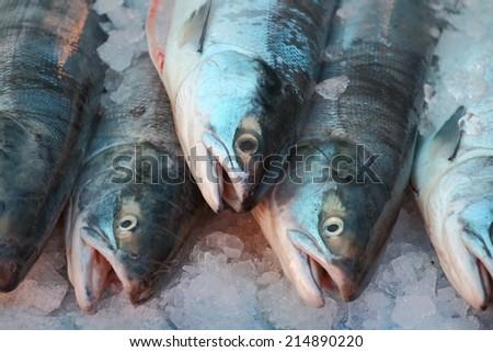 Market Fresh Sockeye Salmon. Fresh caught Sockeye Salmon for sale in the Pacific Northwest.  - stock photo