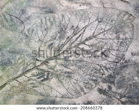 marks of leaf on the concrete pavement - stock photo