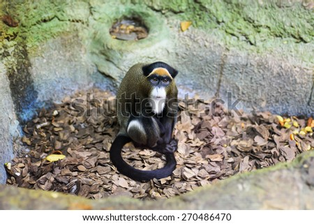Marmoset monkey portrait in zoo indoor Moscow - stock photo