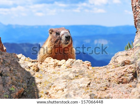 Marmot, Rocky Mountains USA - stock photo