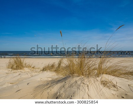 marram grass on a beach at the Island of Usedom, Germany