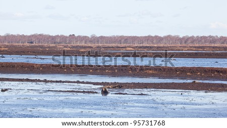 Marsh bog in winter - stock photo