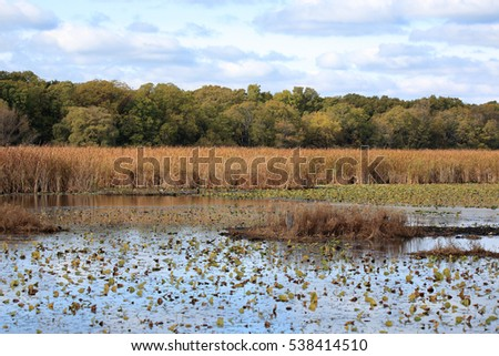 Marsh in autumn with reeds and trees on a cloudy day