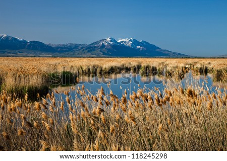 Marsh Land with Mountain in the Background - stock photo