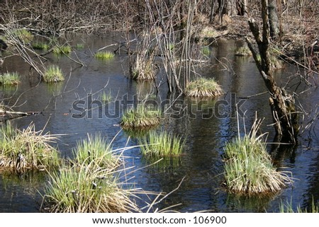 Marsh, pond wetlands - stock photo
