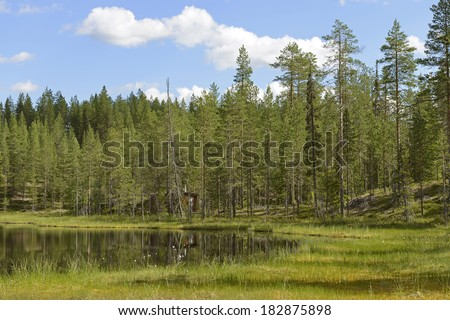 Marshy lakeside - stock photo