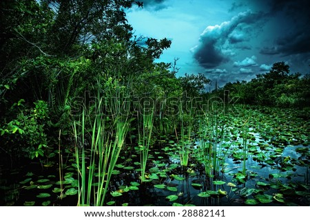 Marshy Swamp Land in Florida - stock photo
