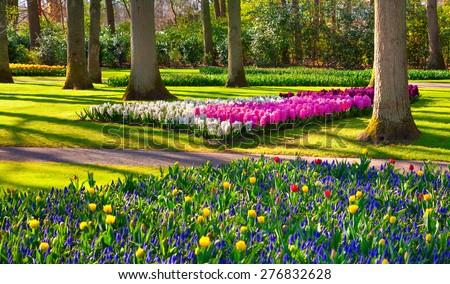 Marvellous flowers in the Keukenhof park. Beautiful outdoor scenery in Netherlands, Europe. - stock photo