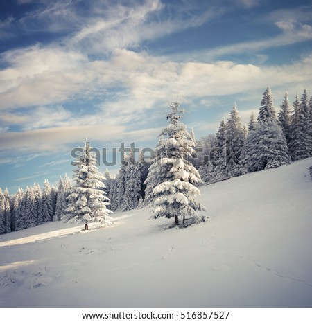 Marvelous winter landscape in Carpathian mountains with snow cowered fit trees. Colorful outdoor scene, Happy New Year celebration concept. Artistic style post processed photo.