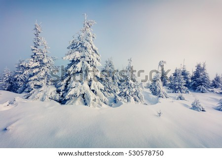 Marvelous winter view in Carpathian mountains with snow covered fir trees. Colorful outdoor scene, Happy New Year celebration concept. Artistic style post processed photo.