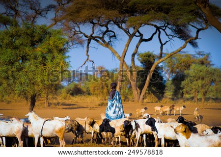 Masai People Stock Images RoyaltyFree Images Vectors - Maasai tribe wild animals attend wedding kenya
