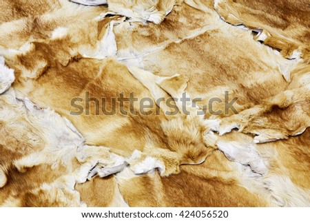 Mass of extended fox skins lies on the floor. - stock photo