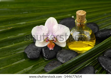 Massage oil with and white orchid wet spa stones on palm leaf texture