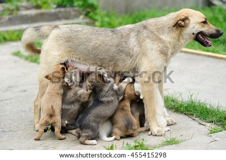 Mather dog feed it's puppies - stock photo