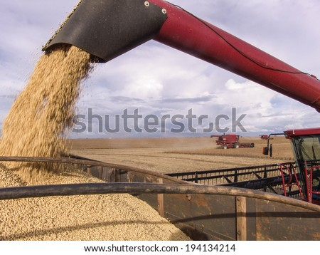 MATO GROSSO, BRAZIL - MARCH 02, 2008: Mass soybean harvesting at a farm in Mato Grosso - stock photo